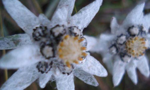 fleur (2)